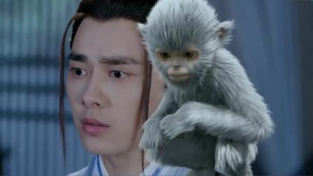 张小凡带猴子上山,师父看到当场大怒,对方却是满脸的无辜