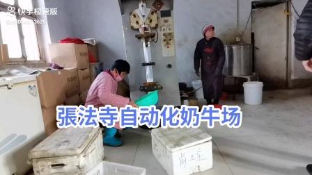 張法寺自动化奶牛场