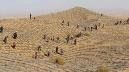 中国辛苦治沙30年,艰难将沙漠变绿洲,如今却出现了这种东西