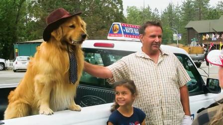 外国的金毛也能当市长,而且还是一个官二代,狗生巅峰!