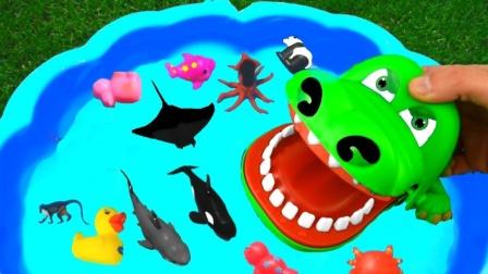 彩色小动物和恐龙玩具来到水上乐园