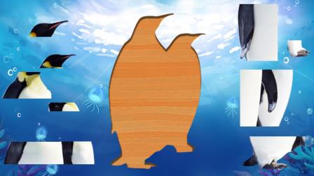 玩可爱企鹅拼图游戏,儿童益智早教动画,婴幼儿启蒙认识动物形状