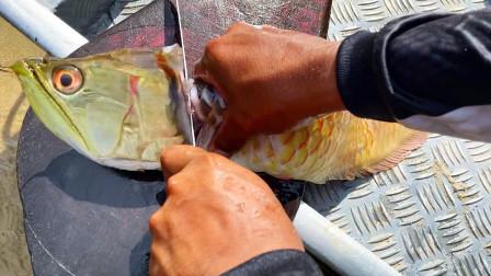 30万一条的龙鱼,就这样被烤来吃了?怎么回事?