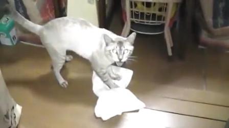主人让猫咪擦地板,猫咪敢怒不敢言,这可是我见过混的最差的猫了