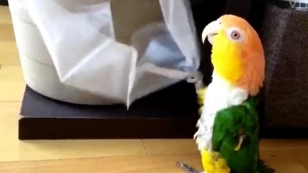 """鹦鹉每天制造各种""""噪音"""",主人崩溃,网友:它能有什么坏心思?"""
