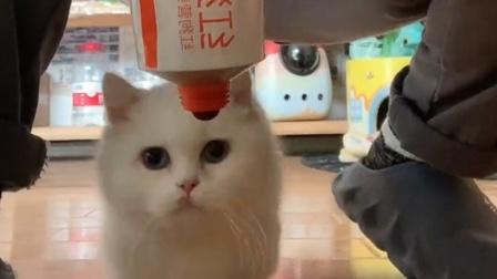 被迫营业!主人用营养膏骗猫咪拍跳舞视频