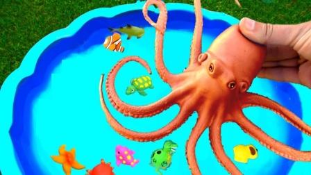 不同的动物玩具来学游泳