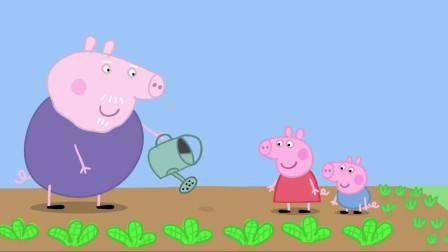 小猪佩奇:佩奇种下草莓种子,过段时间再来看,结出了甜甜的草莓