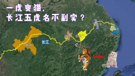 昔日长江五虎消失,一虎蜕变成猫,被甩到三线开外!