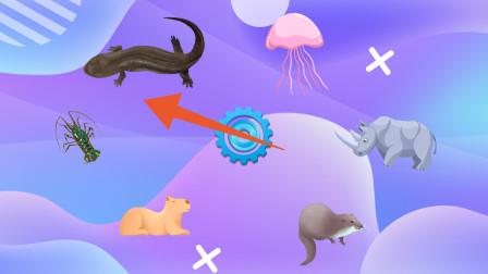 趣味识动物:指针最后会停在哪一只小动物那里呢?认识水豚等动物