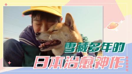 《狗狗心事》:亿万人养狗的真实困境,哭死我了!