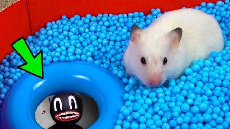 仓鼠误入惊险迷宫,与卡通猫生死搏斗几十回,它能成功逃脱吗?