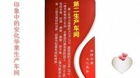 湖南安化三天愉快之旅:印象中的华莱黑茶生产车间