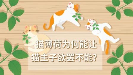 猫薄荷为何能让猫主子欲罢不能?