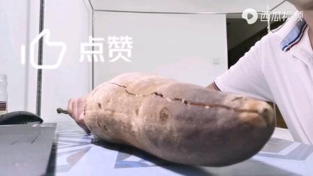 传说中的猴面包果,为什么🐒和人都爱吃
