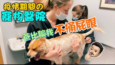 疫情期间的宠物医院 带狗子体检