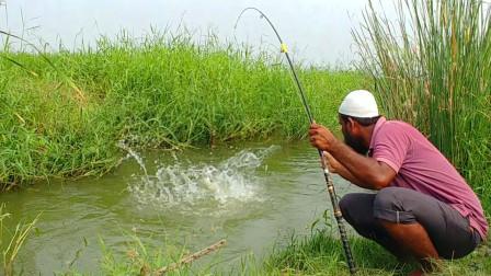 印度大叔秘制鱼饵,野生青鱼连连上钩,看这是什么鱼饵料?