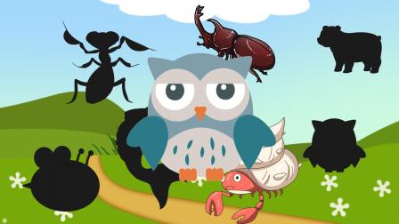 趣味识动物:这些影子都是属于哪些小动物的呢?认识独角仙等动物