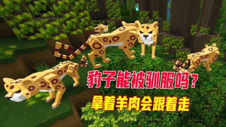 迷你世界大揭秘11:我去驯服豹子,有羊肉就跟着走,却不能被驯服