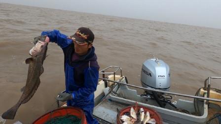 阿杰每次出海总能满载而归,这几天的鱼货太给力,这收入让人羡慕