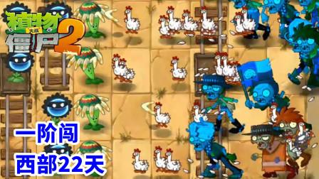 植物大战僵尸2国际版:一阶闯西部22天,回旋镖打小鸡僵尸!