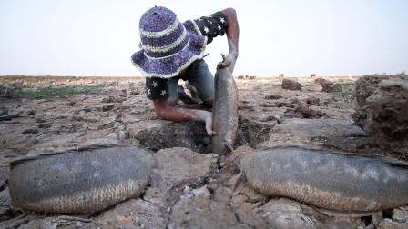 一片干枯的池塘,农村小伙挖开一块泥土,下面全是鱼