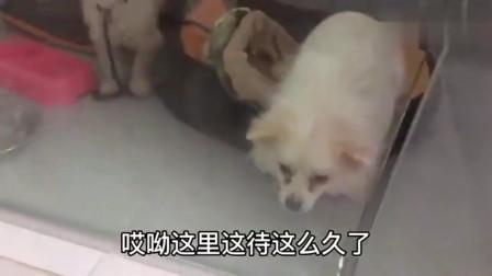 流浪狗:春寒料峭的下午,去医院看流浪狗老长毛,它好吗