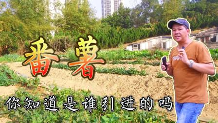 陈益是引进番薯第一人,广东东莞是历史上第一块番薯地,你知道吗