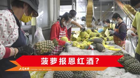 大陆拒绝进口后,6吨台湾菠萝将输入澳大利亚,澳农民质问:凭啥