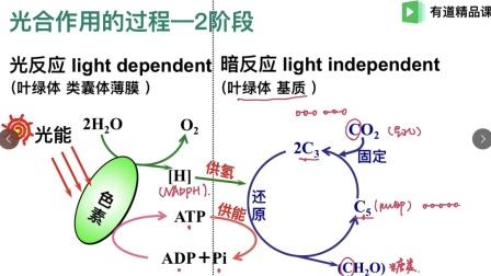 (人教版新课改)高中生物-光合作用的过程-于迪