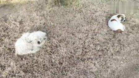流浪狗:流浪狗的艰辛生活,天为被,地为床,食不果腹