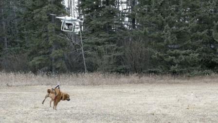 小伙本想用无人机遛狗,结果小狗却和无人机私奔了!
