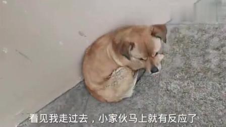 一只通人性的流浪狗,知道不能跟小伙回家,每次都默默在附近守候