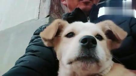 抱着流浪狗狗,我心好痛!这么可爱小宝贝,竟然被嫌弃,为啥呀?