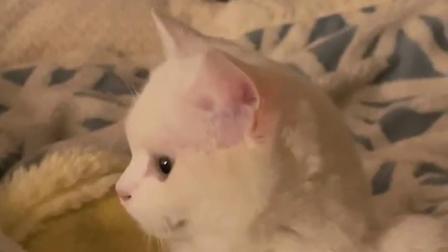 猫:为什么要摇头?不能爱我吗