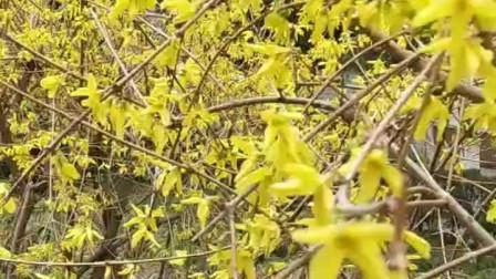 春天美广场舞《禹王台公园》