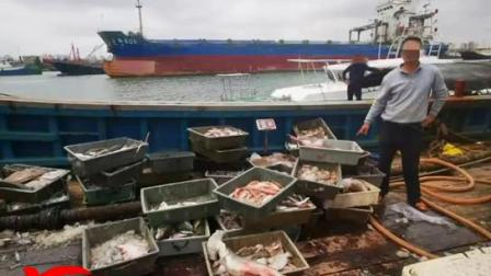 """海口海警局查获一起涉嫌""""危害珍贵、濒危野生动物""""案件"""