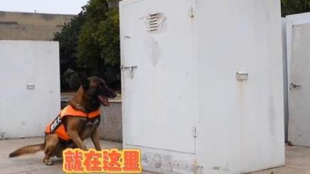 你可能不知道,有一份最赤诚的爱,是来自搜救犬!