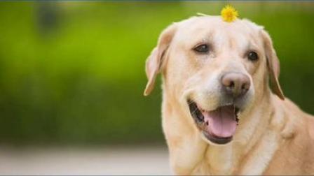 合川电子养犬登记证办理流程来了!