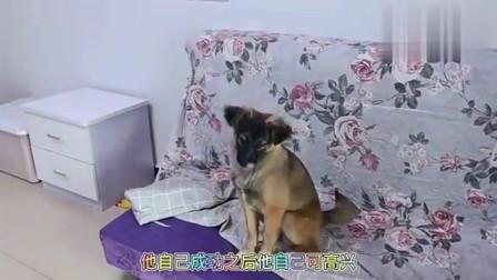 前主人来看收养的流浪狗,狗狗竟疯狂的表演技能,乖的让人心疼!
