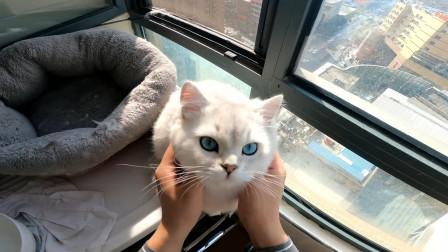 第一人称视角撸猫,又是开心的一天呀