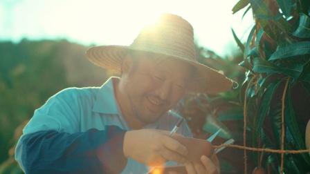 海南农人种出比奶茶还好吸的芒果