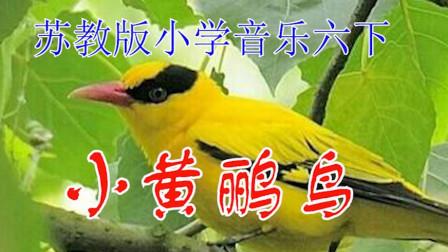 苏教版小学音乐六年级下册《小黄鹂鸟》