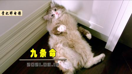 总裁意外变成猫,被家人当成宠物养,因为太调皮要给它做绝育!