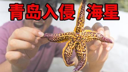 拿青岛泛滥的海星给海南朋友吃,纷纷表示不敢吃,有危险