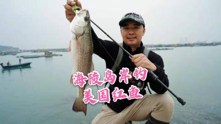 海陵岛岸钓美国红鱼,追到脚边才咬中亮片,个头不大但是拉力过瘾