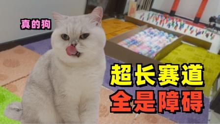 为了吃猫可以有多努力!全家所有的道具都挡不住