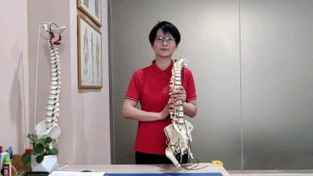 下背痛与姿势异常之骨盆前倾的评估