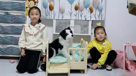 狗狗故事:小四把艾米儿的作业本藏在床底下,被苏菲娅和由旦发现