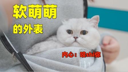 有些猫看起来软萌可爱,一到医院就凶成母老虎